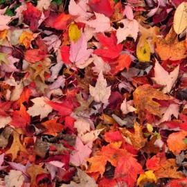 Leaf Fell Down
