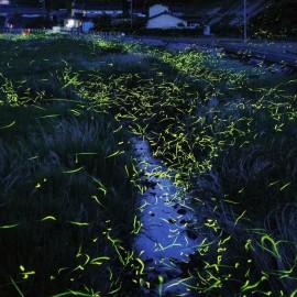 Firefly Ramblings…